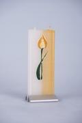 Tulp geel